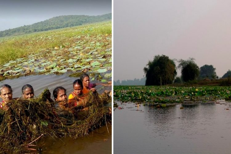 Village Women Take Charge And Clean Fresh Water Lake To Revive Tourism With Help Of An NGO