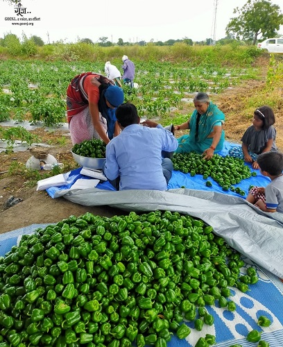 Going sustainable with community farming